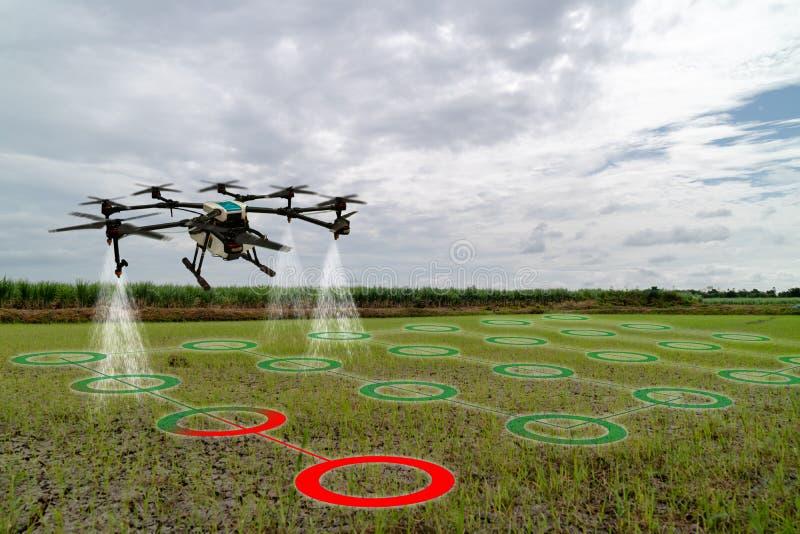 Iot smart åkerbruk bransch 4 0 begrepp, surr i precisionlantgårdbruk för sprej ett vatten, gödningsmedel eller kemikalie till fäl royaltyfri foto