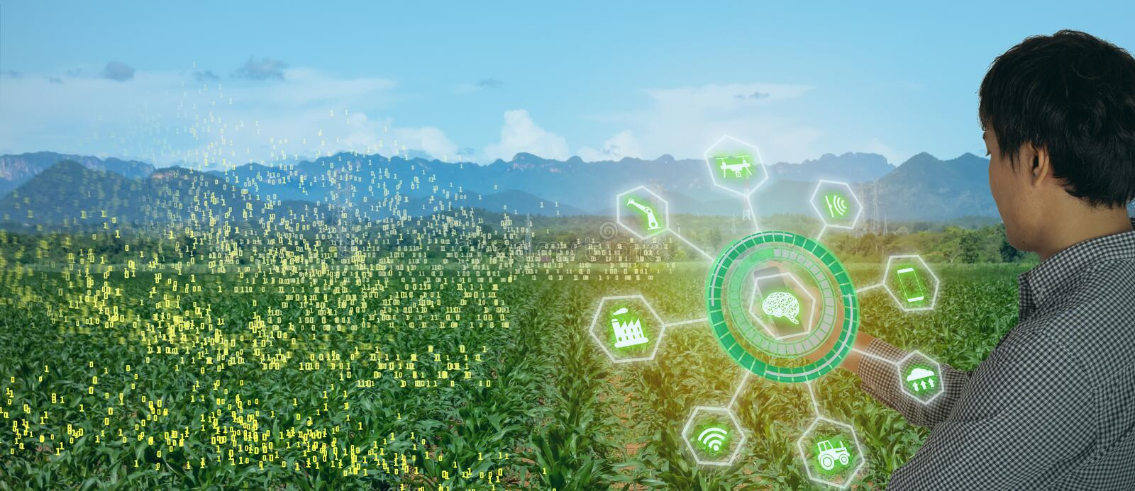 Iot smart farming, agriculture in industry 4.0 technology with artificial intelligence and machine learning concept. it help to im. Prove, categorized, specified stock photo