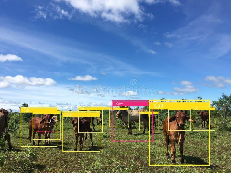 Iotmachine die met mens en objecten erkenning leren die kunstmatige intelligentie aan metingen, analitisch en identiek c gebruikt royalty-vrije stock foto's