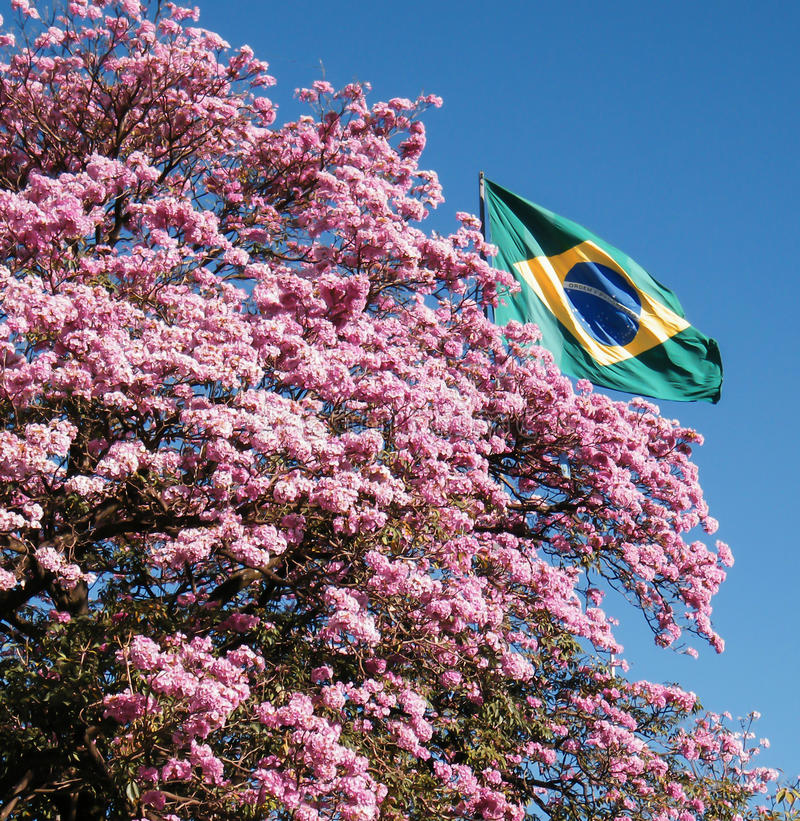 Ipes de Brasil imagem de stock royalty free