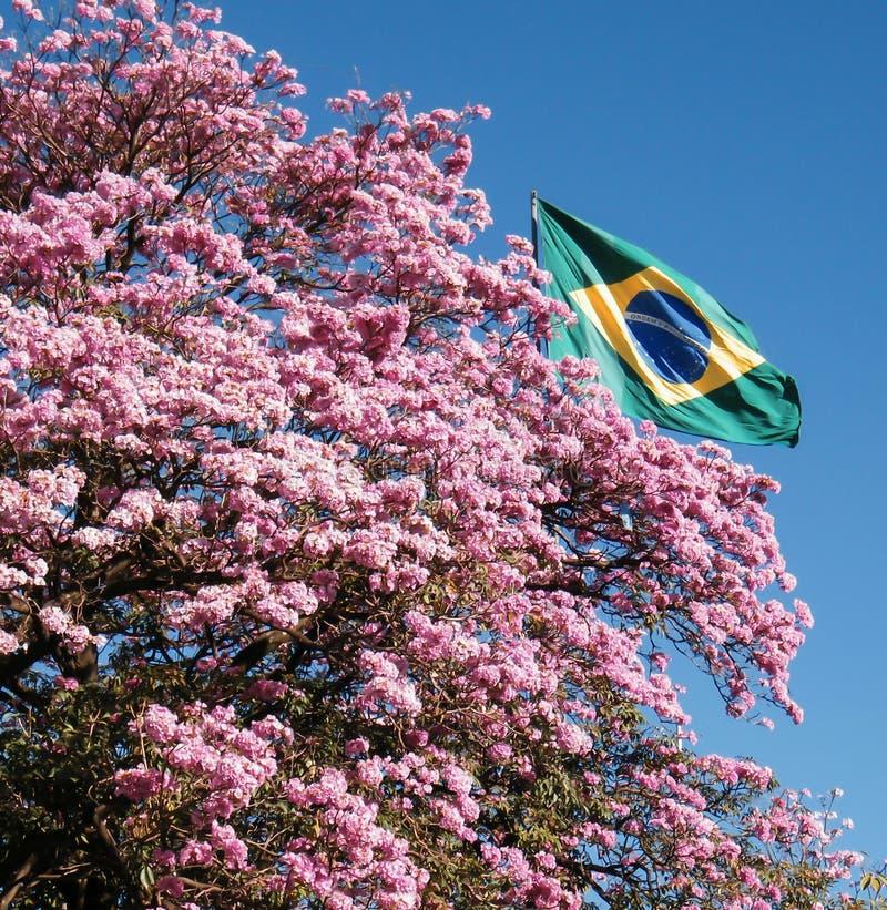 Ipes van Brazilië royalty-vrije stock afbeelding