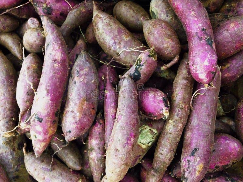 Ipomoea batatas foto de archivo libre de regalías
