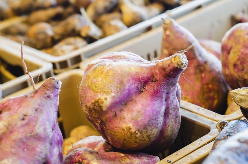 Ipomoea batatas, comunemente chiamata patata dolce, patata dolce o patata dolce, patata dolce del cahuhtli, moniato o patata dolc immagine stock libera da diritti