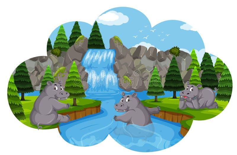 Ippopotami che giocano in cascata illustrazione di stock