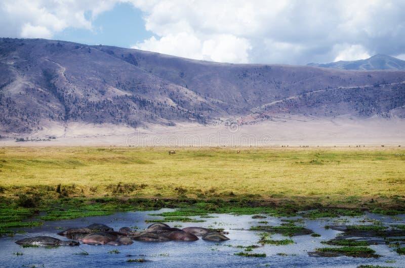 Ippopotamo, cratere di Ngorongoro fotografie stock libere da diritti