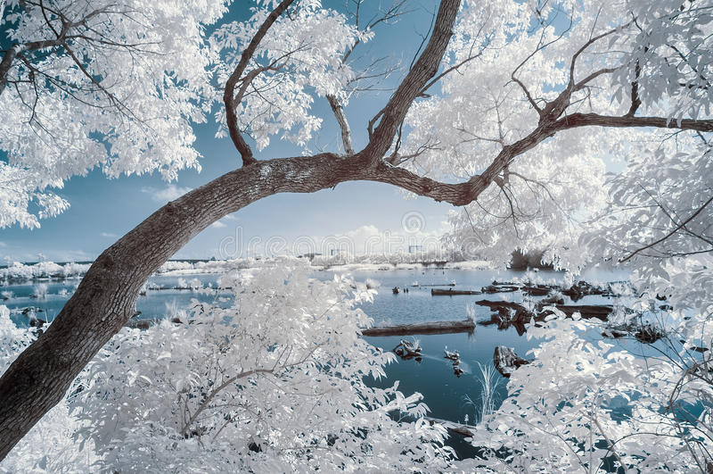Ir-landskap royaltyfria foton