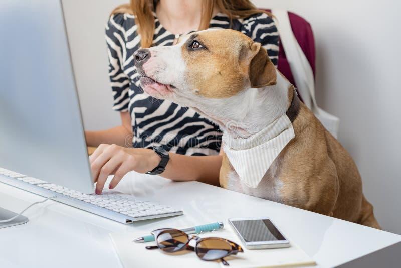 Ir trabalhar com conceito dos animais de estimação: cão bonito com o proprietário fêmea em f fotografia de stock royalty free