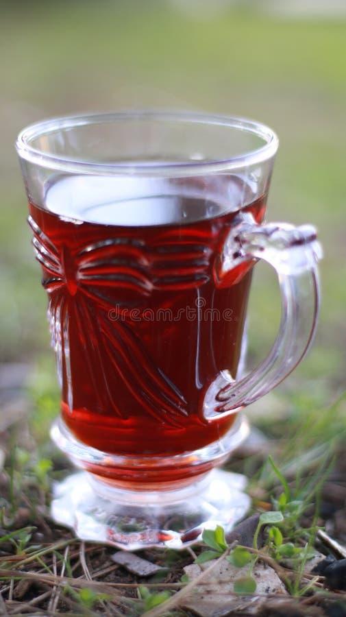 Irakisches Naturfoto des Tees geliebt stockfoto