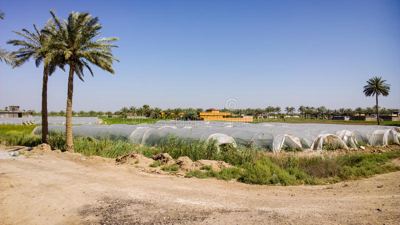 Iraqi countryside. A picture of the Iraqi countryside that contains Plantation and palm trees and The houses Plastic for seasonal crops stock image