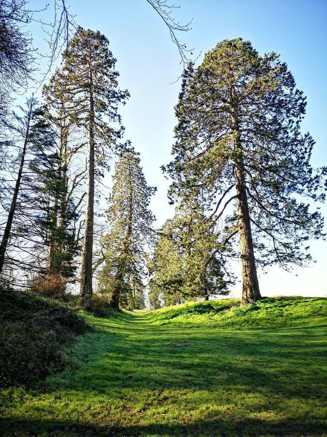 Ireland, Dublin, Nature, North Wood, Big Trees royalty free stock photography