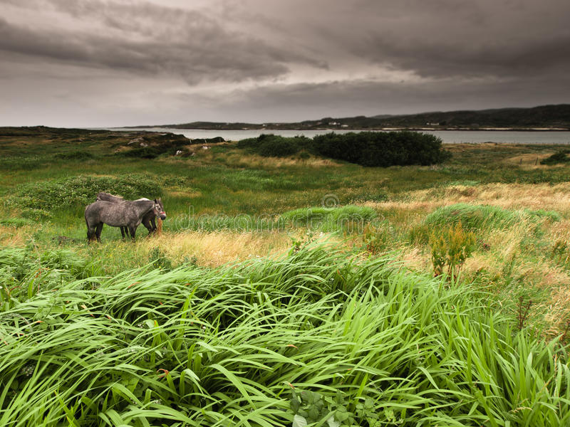 Ireland: horses and grass royalty free stock images