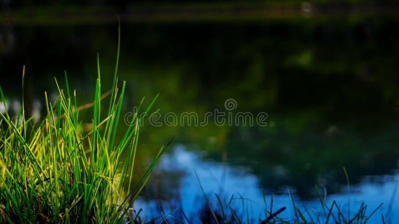 Irgendeine Grasseite von Teich haben irgendeine Seite des grünen Grases von Teich lizenzfreie stockfotos