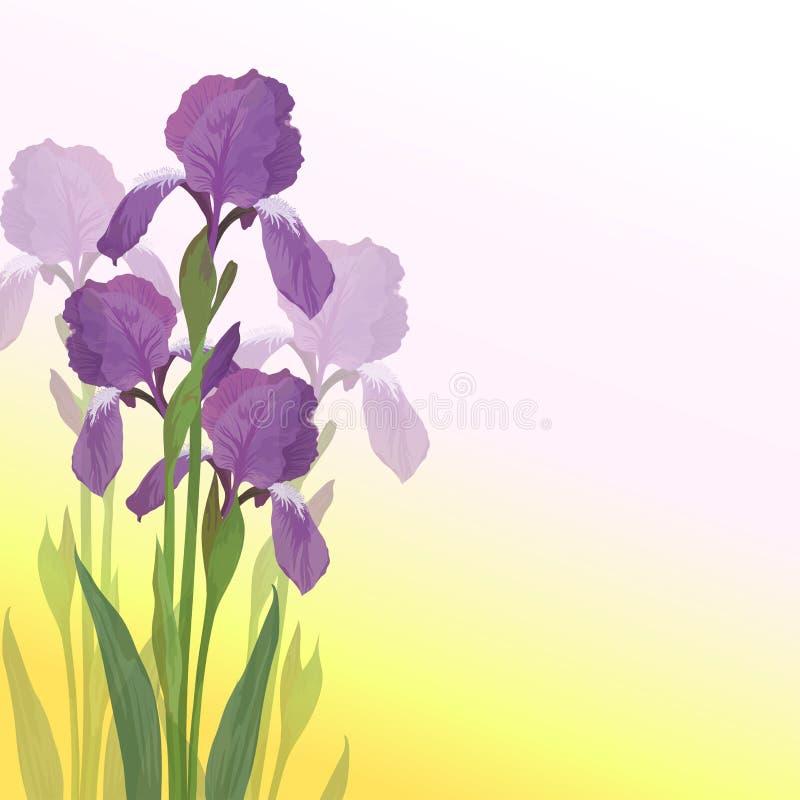 Iride dei fiori su priorità bassa dentellare e gialla illustrazione vettoriale
