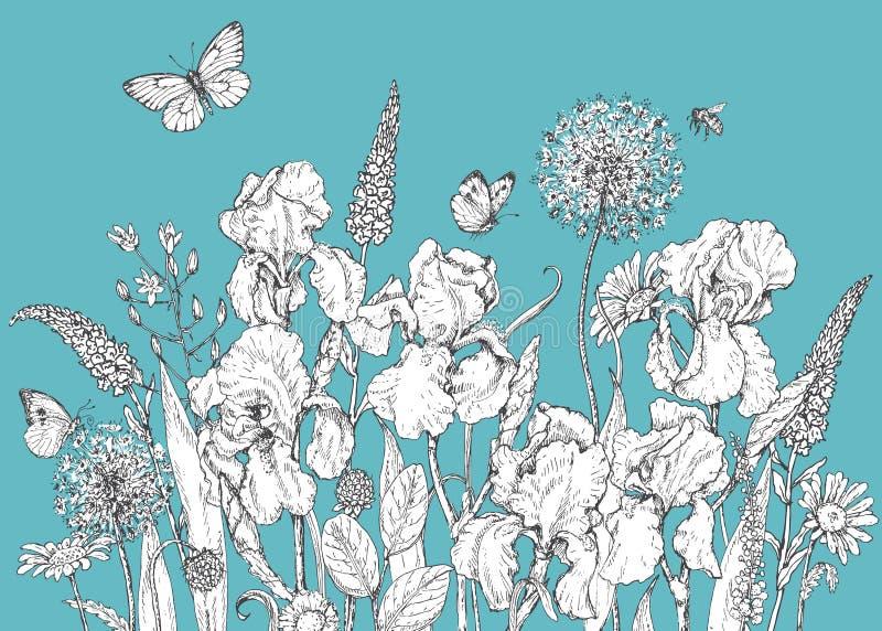 Iride, fiori selvaggi e schizzo degli insetti royalty illustrazione gratis