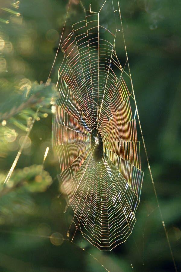 Download Iridescent Spiderweb stock image. Image of network, spiderweb - 6978953