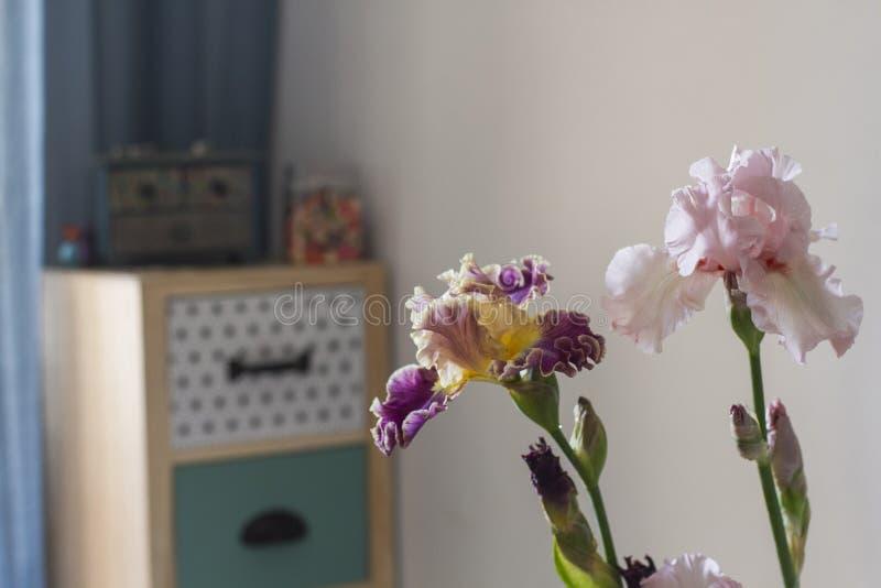 Iridi dei fiori nell'interno domestico dell'appartamento fotografie stock libere da diritti