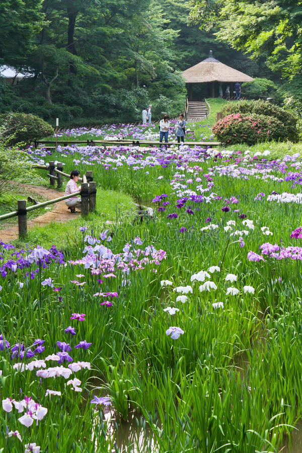 Iridi in Meiji Shrine a Tokyo fotografia stock