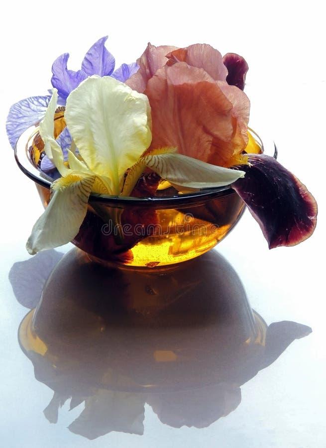 Iriers i anbud för kronblad för vasblommareflexion färgar genomskinligt blått vatten för gul brunt royaltyfri foto