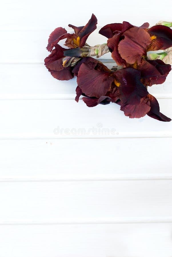 Irins blommar på en rosa bakgrund arkivfoto