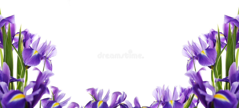 Iris. Spring flower frame made from iris stock photos