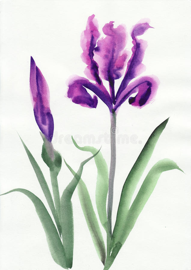 Iris illustration libre de droits