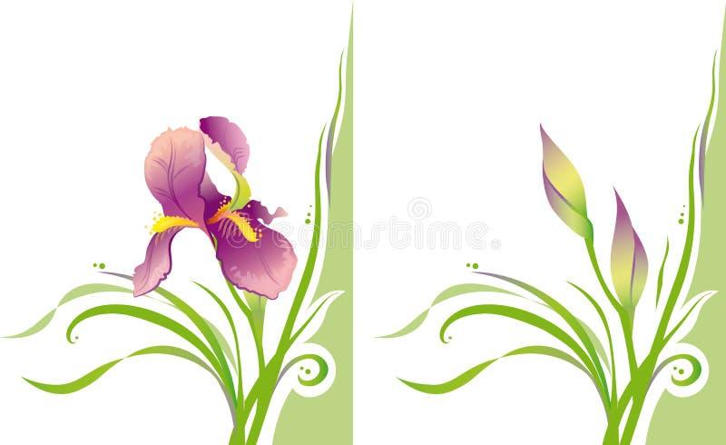 Iris stock abbildung