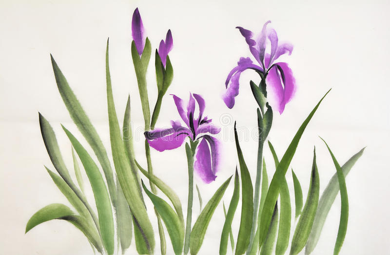 Iris illustration stock