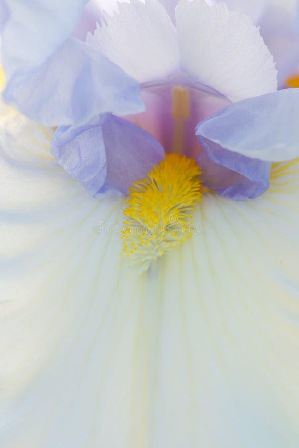 iris photos libres de droits