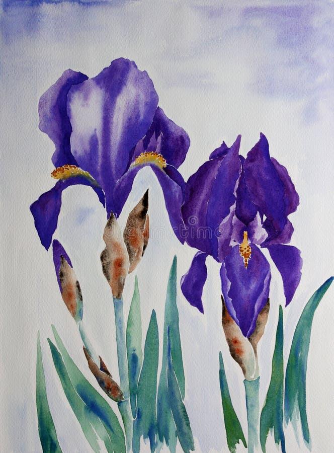 iris royaltyfri bild