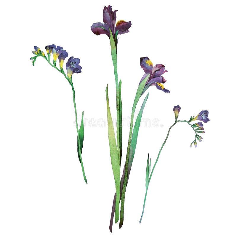 iris image stock
