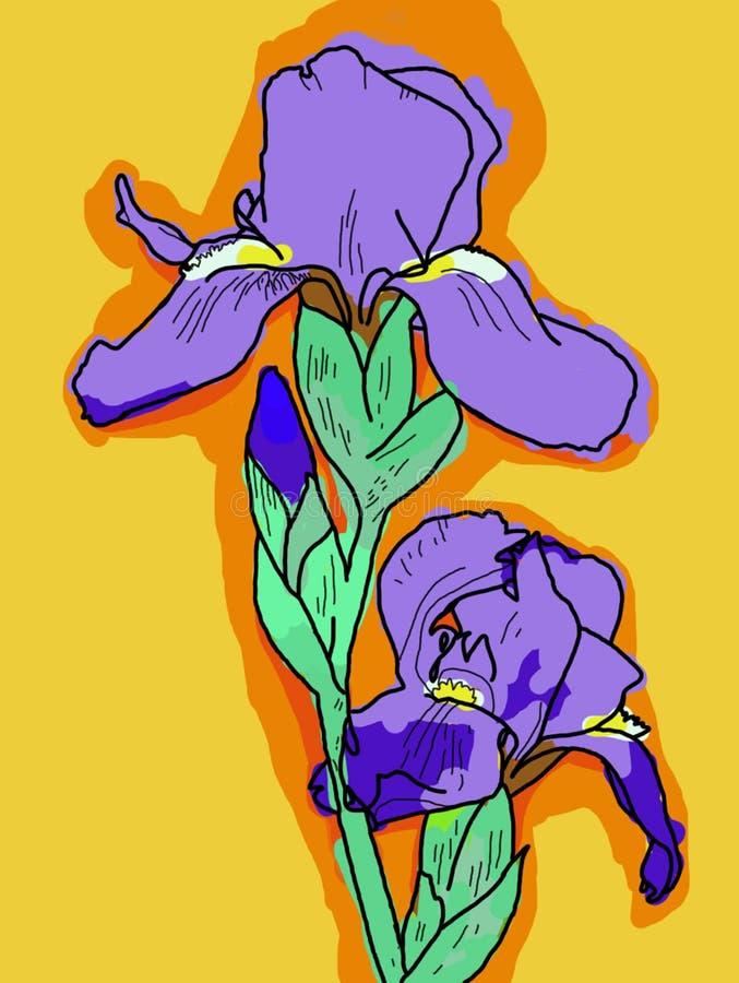 Iris against an orange background royalty free stock image