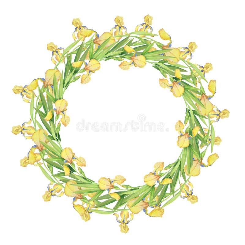 Iris amarillos, guirnalda delicada hermosa de flores y hojas, ejemplo de la acuarela fotografía de archivo libre de regalías