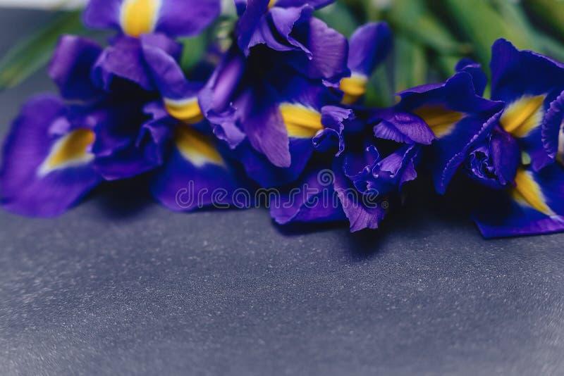 Iris auf dunklem Hintergrund im Studio lizenzfreie stockfotografie