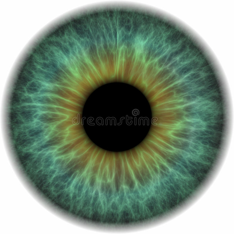 Iris azul ilustración del vector