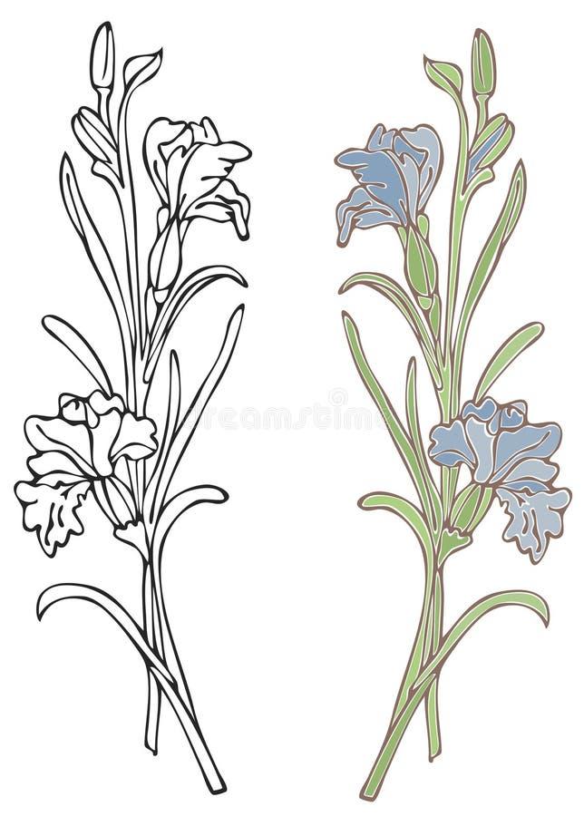 Iris bleu illustration de vecteur