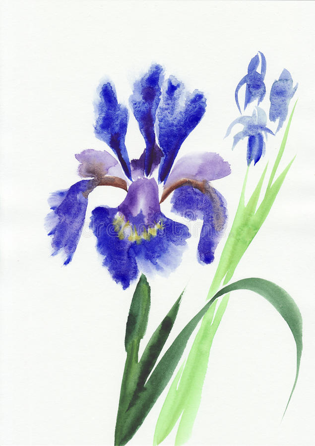 Iris bleu illustration de vecteur