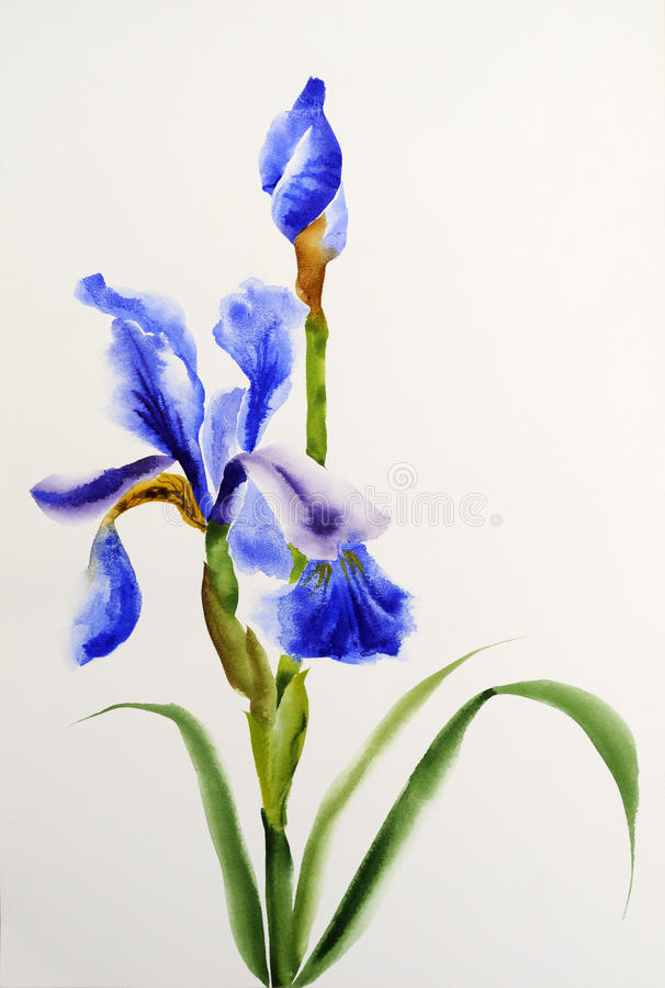 Iris bleu illustration stock