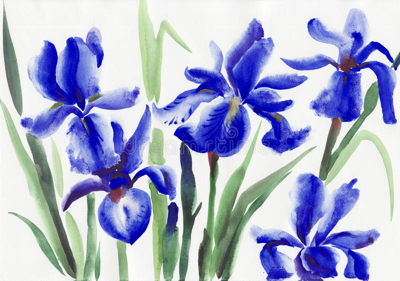 Iris bleu illustration libre de droits