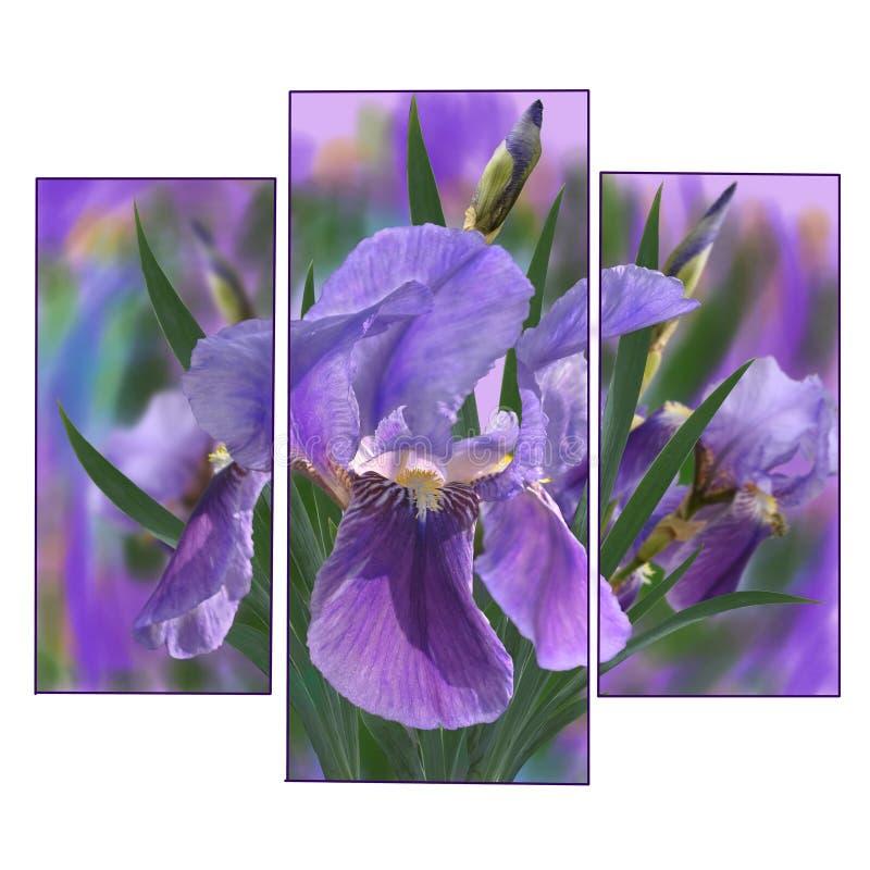 iris stock illustrationer