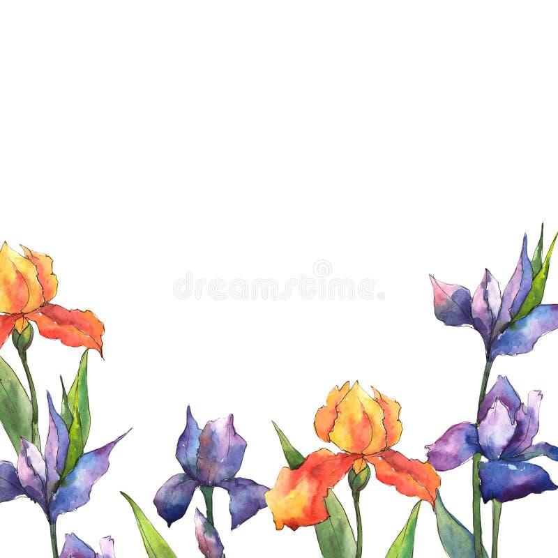 Iris coloridos Flor botánica floral Cuadrado del ornamento de la frontera del capítulo ilustración del vector