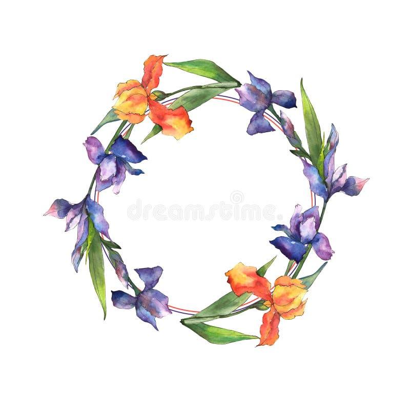 Iris coloridos Flor botánica floral Cuadrado del ornamento de la frontera del capítulo libre illustration
