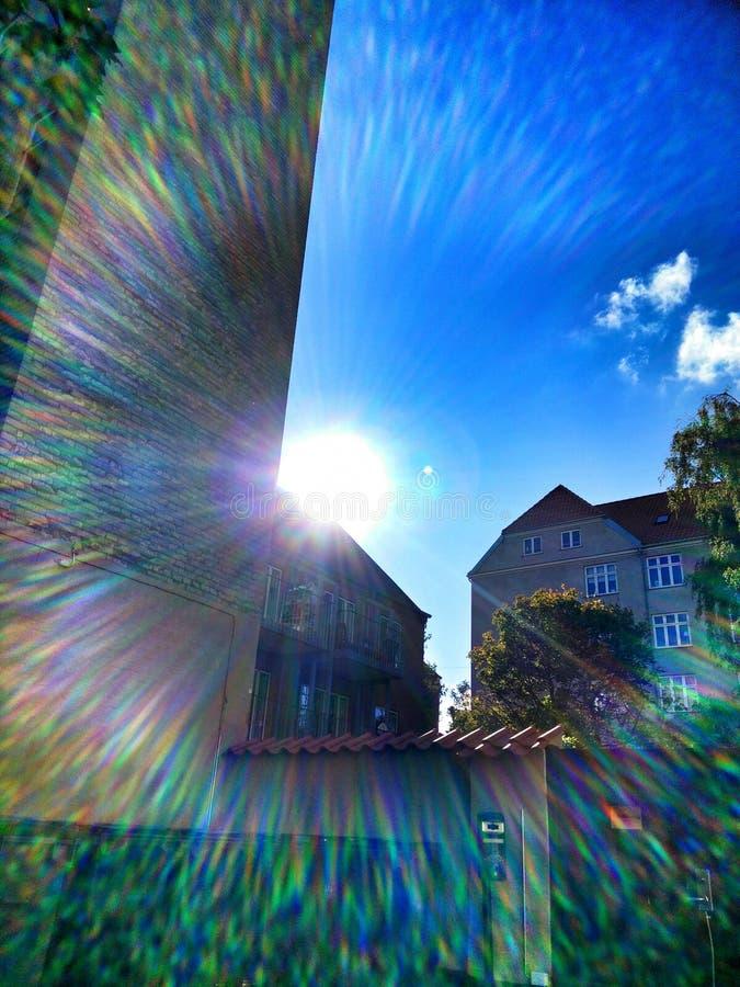 Iris del verano imágenes de archivo libres de regalías
