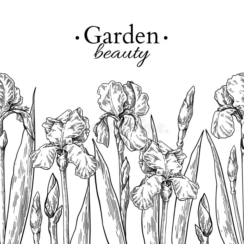 Iris flower and leaves border drawing. Vector hand drawn engraved floral seamless pattern vector illustration