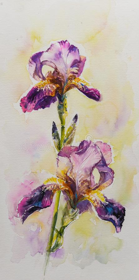 Iris flower watercolors painted. stock illustration