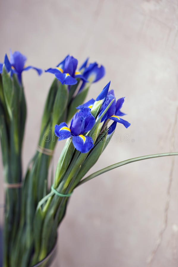 Iris Flowers stock images