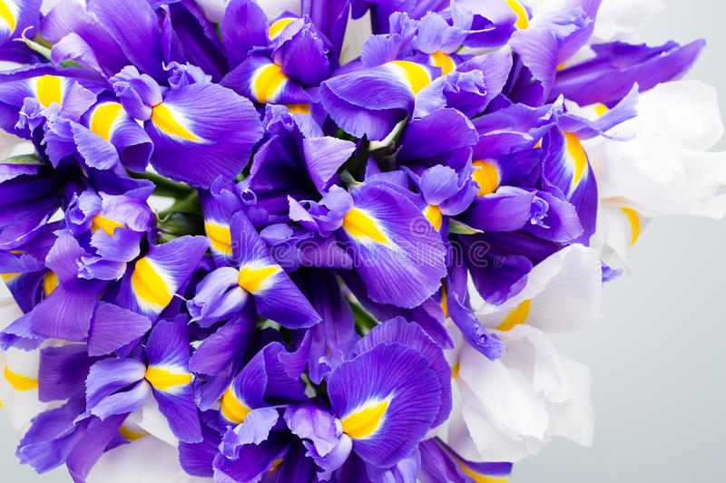 Iris flowers background, spring floral patern. royalty free stock photos