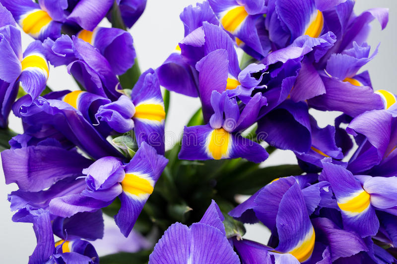 Iris flowers background, spring floral patern. stock image