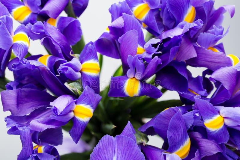 Iris flowers background, spring floral patern. Iris flowers background, spring floral patern stock image