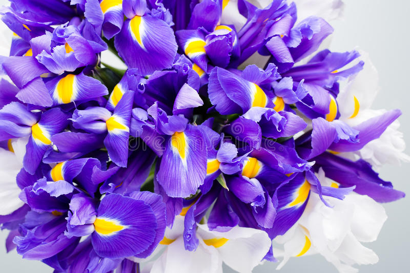 Iris flowers background, spring floral patern royalty free stock photos