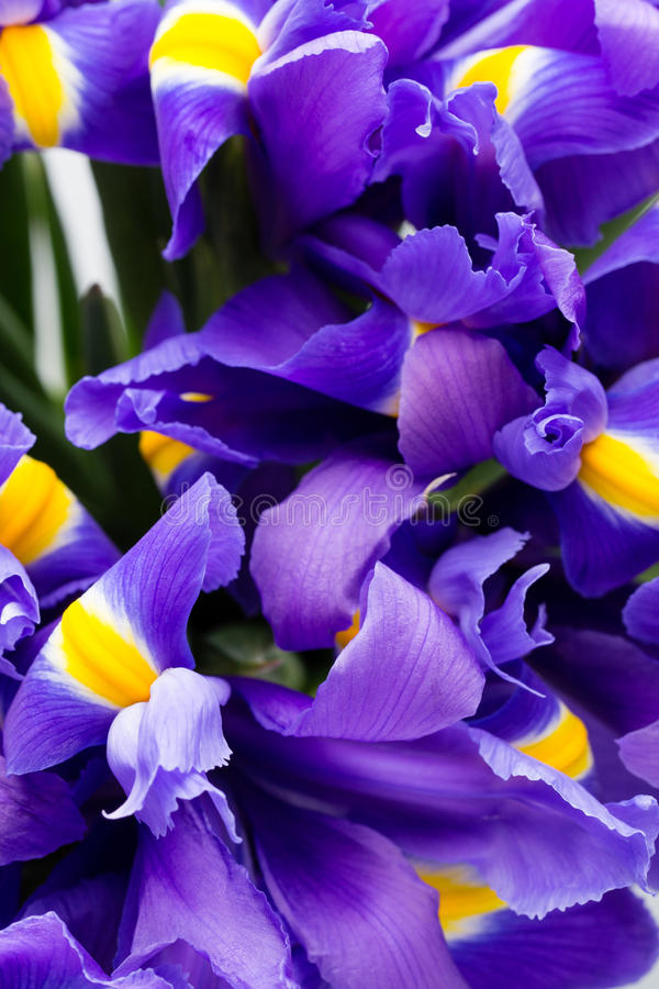 Iris flowers background, spring floral patern. stock images